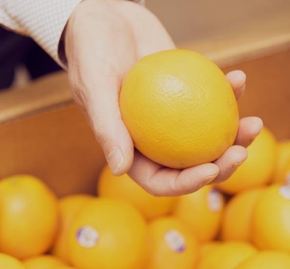 pgholiday2015_oranges.jpg